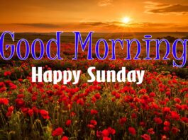 A picture of sunset with flower in the fields and good morning happy Sunday text on it